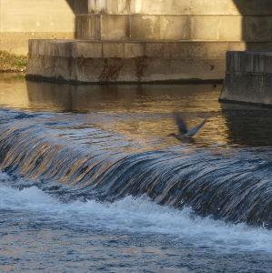 OLYMPUS OM SERIES (いつもの風景) 今朝の撮影 少しずつ鴨川の水の色が春めいてきたような気がします。 alto****