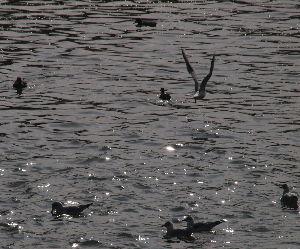 OLYMPUS OM SERIES (いつもの風景) 今日の午前に撮影 鴨川三条大橋付近 川面が太陽でキラキラ。 alto***** O