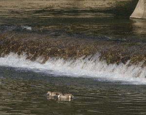 OLYMPUS OM SERIES (いつもの風景) 現在15時 外気温 7度の午後のひととき。 画像は代わり映えのしない、いつもの鴨川
