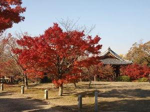 OLYMPUS OM SERIES (いつもの風景) 聞くところによれば 今日も東福寺や永観堂も 人が一杯とのことで自宅から 少し遠距離