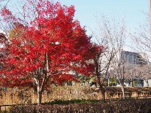 OLYMPUS OM SERIES (いつもの風景) 寒い一日でしたが 少し足を伸ばして 国立?国際会議場付近まで。。 思ったより 絵に