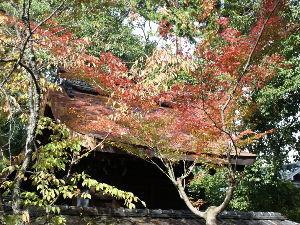 OLYMPUS OM SERIES (いつもの風景)ひよっさんの紅葉 ひよっさん-とは 我が地域の氏神さん。 京女(京都女子学園***)