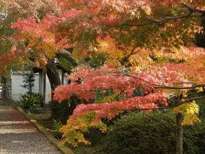 OLYMPUS OM SERIES (いつもの風景)養源院の紅葉 昨日の撮影画像・・ いつもはこの境内を 散歩だけですが昨日は観光客も少