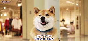 3244 - サムティ(株) 配当取りまでには2000円超えるよ。