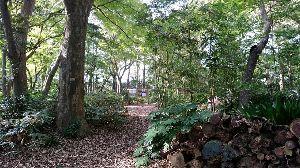千葉県の茂原・長生地区、いすみ市・夷隅地区で asunaroさん 十枝の森 もみじはまだ緑でした  うまく 添付できないです   今日娘のお稽古の