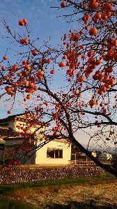 ひとりごと☆彡 秋の風景