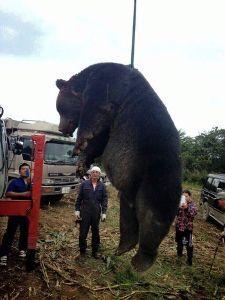 ^DJI - NYダウ 2015年に北海道で駆除された体長約2・8メートル、体重400キロの巨体ヒグマ、、デケ~コエ~、、