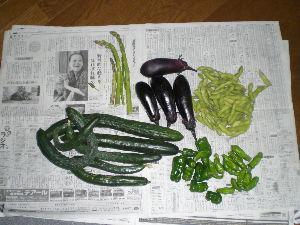 家庭菜園の新人 今日の収穫  台風前に・・・