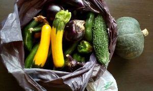 家庭菜園の新人 今日久し振りに薄曇りでほんの少し暑さが和らいだ感じ。  値上がりで貴重になった夏野菜とスイカを収穫し
