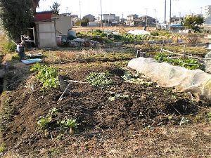 家庭菜園の新人 今日は雪もおさまり、3月いっぱいで明け渡す畑のかたずけに。 やっと慣れてきた畑を潰すのは何とも淋しい