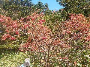 春よ早く来い。              昨日出かけた野山 ナナカマド実が真っ赤に熟れてきれいでした。