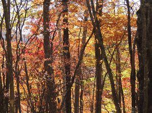 春よ早く来い。 ※                  昨日撮った紅に染まる森