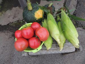 春よ早く来い。  ※       実りの秋 我が家の菜園で採れた自慢の野菜  モロコシ トマト 南瓜 新鮮ですよ。