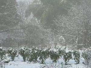春よ早く来い。                      こんにちわぁ~   昨日は吹雪きで寒さが厳しい一日でした。