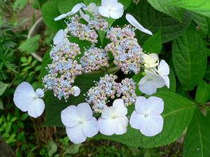 春よ早く来い。   hanamameさん こんばんわ。   花物の名称を知らないのは沢山ありますよ。  ジキタリスを