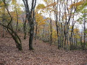 日本列島 紅葉から落ち葉の季節。