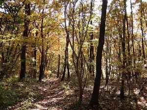 日本列島 紅葉から落葉の季節。