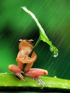 (=゜-゜)(=。_。)雨やどり たまたま  ほん!!  たまたま  ひさびさ  今日も  夏風邪  夏台風  熱中症  日射病  お