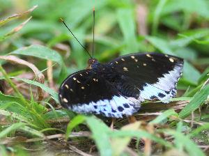 気軽に写真撮影を 1264画像に続く  蝶に関しては全くの無知で種類名は分かりません 蝶を寫す場合はどんな処に注意する
