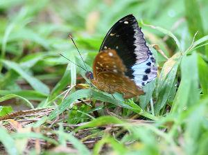 気軽に写真撮影を 蝶 今朝、我家の玄関先で見つけた蝶です 蝶の種類名は分かりませんが綺麗なので寫しました