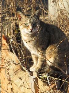 金持ちを明日から貧乏人にする経済学 >私も地域猫の観察を続けていますがネコボランティアの話だとひどい虐待をされるネコも多いようです。