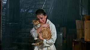 金持ちを明日から貧乏人にする経済学 私も地域猫の観察を続けていますがネコボランティアの話だとひどい虐待をされるネコも多いようです。  な