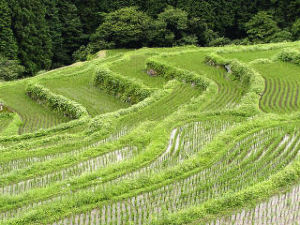【50代からのしりとり】 【棚田の田植えは大変だ】・・・だ、た  みなさん、おはようございます。  うちの近くの田んぼが造成さ