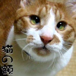 【50代からのしりとり】 猫の額(ねこのひたい)・・・い  たしかに暇いかな。だからなんなのって顔してますね。