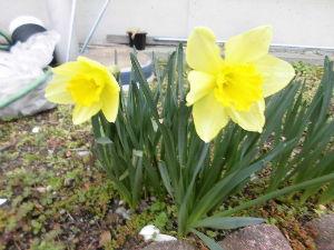 夏もあとわずか・・・。 ゆいさん、葵さん、おはよう~~ ご無沙汰しています 少し春らしくなってきましたね  ゆいさん いよい