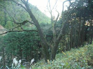 箱根の質問何でも下さい。   今朝は湯本で13度 やはり朝晩は肌寒いです。  もう平地では桜はとっくに終了ですが 箱根の桜前線