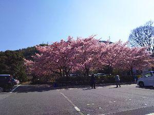 箱根の質問何でも下さい。 今朝 湯本は3時で6度。 ここの所 温度差が大きくて 体調管理が大変です。  ここにきて 国会は不安