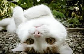 test やっぱ、猫いいな 欲しい  目標:猫屋敷!! 頑張って、お金貯めるか  他所の猫トピを読んで、 わた