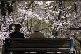 test 婆:また今年も花見ができましたね  爺:うん、できましたねえ~