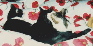 test うちの猫達、案外皆仲良しだったんだな って言うか、それぞれ個人主義って言うか、関わらなかったって事?