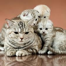 猫に愛車をキズにされたら 無視リストどうでもいいんだよ 此処の者の悪行が外部の者の 目にとめるのが目的だからょ