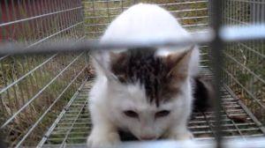 猫に愛車をキズにされたら ケダモノに  ひっかかれるまえに  ケダモノ駆除