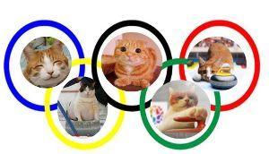 猫に愛車をキズにされたら ねこカーリング 金メダル おめでとう ☆😺♪。💐💐✿♪☆