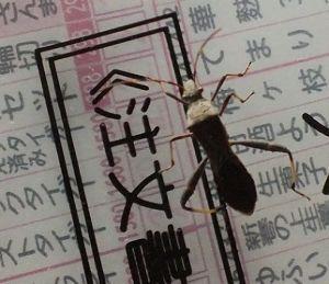 信州自然談話室 今日は 久しぶりに 最高気温が二桁に・・・暖かく感じました。  先日 室内をウロウロしている虫を発見