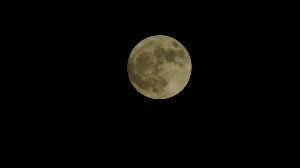 信州自然談話室 昨夜は満月、そして スーパームーンでした。  今日は 雨降りです、昨夜 月が見られて良かったです♪