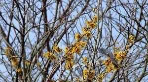 信州自然談話室 一雨ごとに暖かくなる・・・  梅も咲きました、次は 桜(河津桜)です。  平昌五輪 終わりましたね~