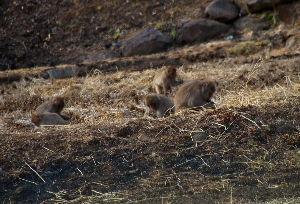 信州自然談話室 近くにはこんな集団もいました。 人家近くの田んぼです。