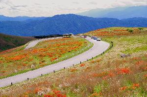 信州自然談話室 半年も経つのが早いですね。もう夏至です。 こちらの田植えは梅雨前に終わりました。  いま、霧ヶ峰高原