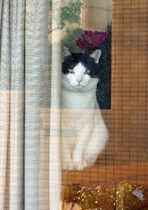 石垣りんさんの追悼を ちょっと写真を間違えた。 ごめんニャンm(__)m ←猫に対して