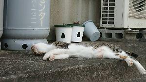 一日の想い出 暑いですね(*_*) 野良猫・・・・・ねこも、も~~だめ!