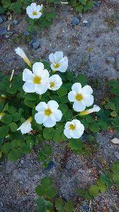 一日の想い出 おはようございます! 朝夕寒くなってきましたね 最近の花壇の様子です