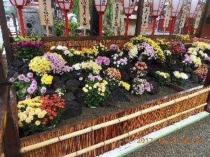 お暇な時間にどうぞ~♪  もしさん ロマンさんお早う御座います、昨日は所用で出掛けて一寸時間が 有ったので浅草寺の「菊花展」