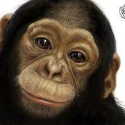 Teaching of monkey