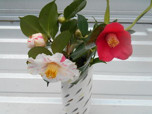 (^◇^)・・・ アハさん・・・(^◇^)  ✨こんにちは✨✨  家の椿が 咲きだしました。  アハさんの所の お花