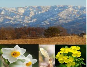 (^◇^)・・・ アハさん・・・(^◇^)  こんにちは(^_-)-☆  もう2月も終わりですね 3月 新春ですね