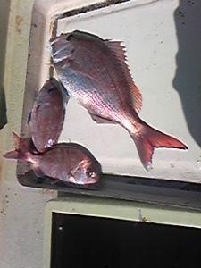 明石海峡の釣りを楽しく!情報交換の場 天候が回復し、潮が良くなかったのですが我慢できずに釣りに出ました。